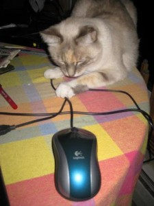 cat playing with a computer mouse